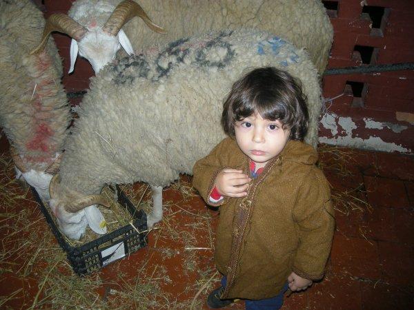 aymen et son mouton