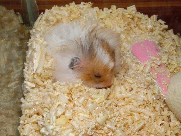 encore une photo de mon hamster