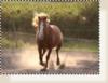 Earth-0f-Wild-Horses