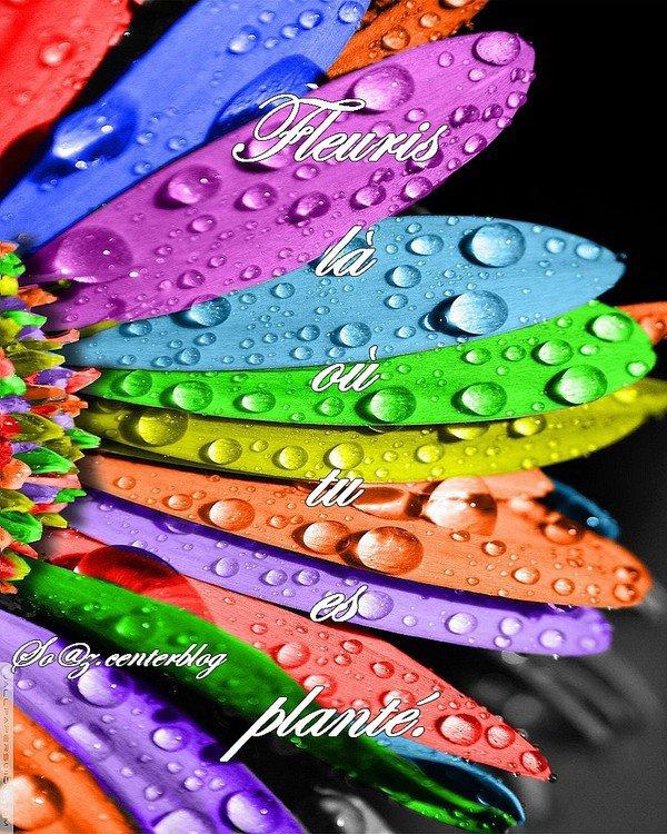 Une jolie palette de couleur, la couleur est très importante pour le moral , couleur pétante superbe!
