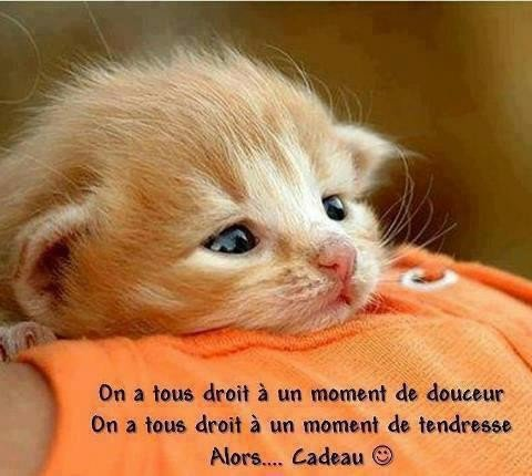 Je vous souhaite une belle est agréable journée mais amis (ies), kissous
