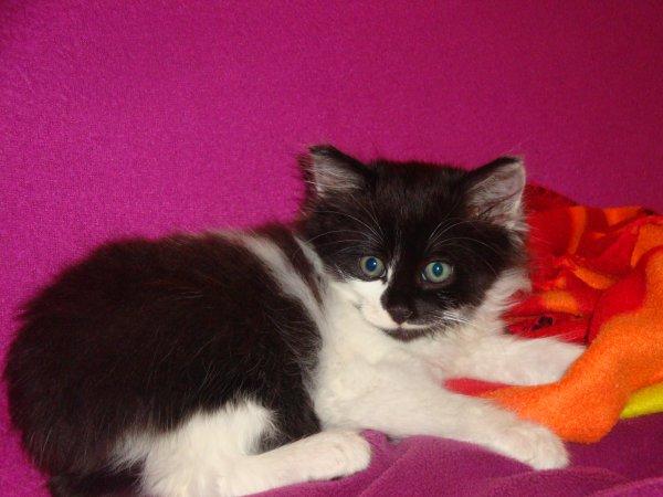 voici le nouvel arrivant dans notre famille ^^ Dexter^^