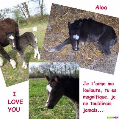 Aloa ma pouliche d'amour