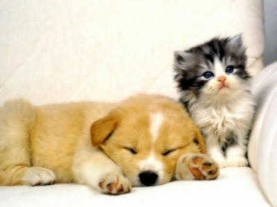 Sa commence par une photo d'un chien & chat ....