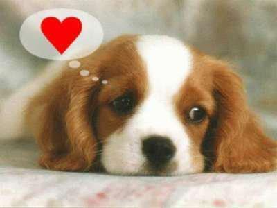 Parce que les chiens aussi aime pensée.....