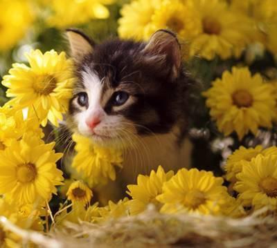 Parce que les chats aime les fleurs Jaunes.....