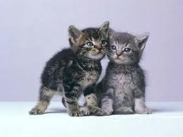 parceque les chat aiment se faire des calins