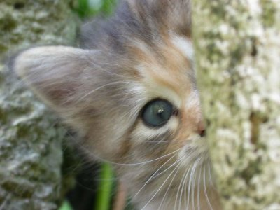 Parce que Les chats aiment jouer a cache-cache ....