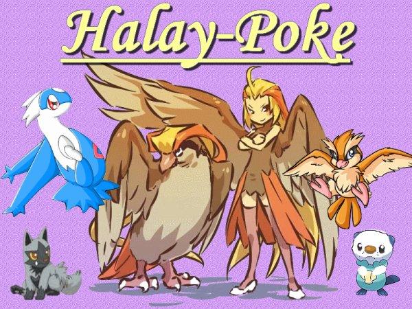 pour Halay-poke