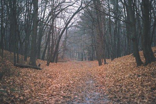 L'automne est une saison sage et de bon conseil.