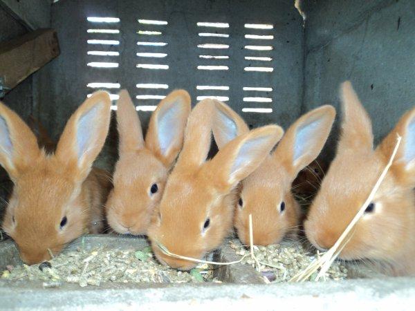 Mon élevage de lapins