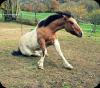 Apprenez à écouter ce que votre cheval murmure à votre oreille.