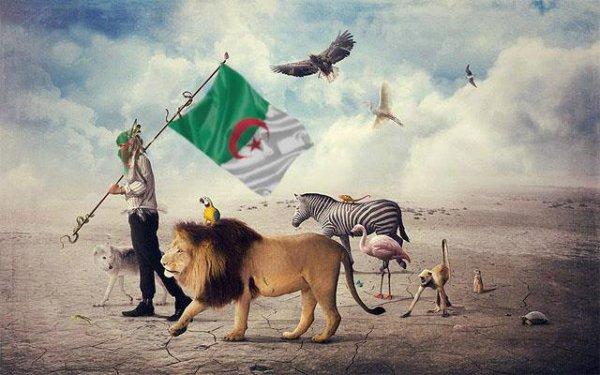 Tahia Al DJazaiiir      SKYBLOG     |||||          FACEBOOK