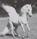 Photo de Sherlock-Pegasus