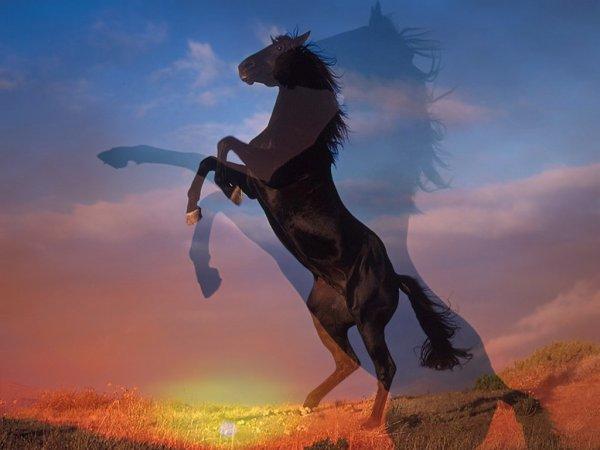 Chevaux trop beau blog de xx amieavecleschevaux xx - Dessin de chevaux sauvage ...