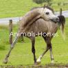 Animals-Horses