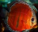 Photo de poissonsdesayat