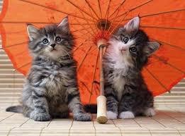 Ce sont des chats venant du Japon !