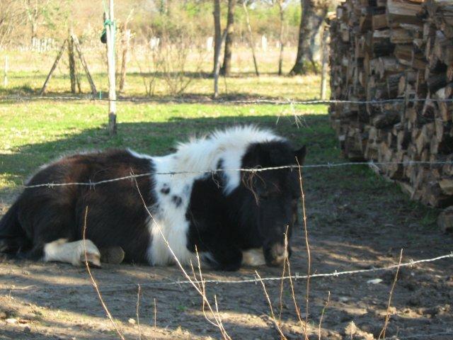 Salut ici c'est tout sur les chevaux et sur les potes