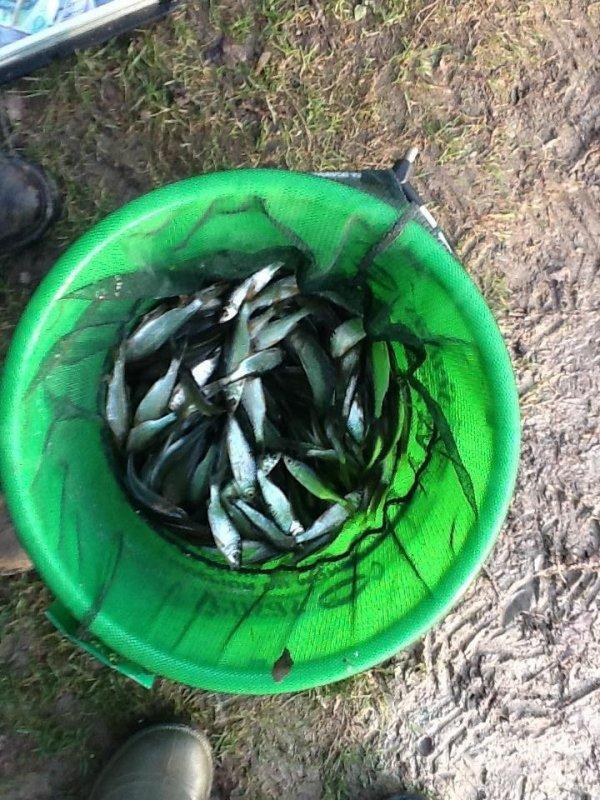 Pêche au coup d'hiver
