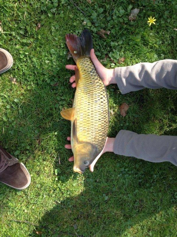 Pêche carpe au coup