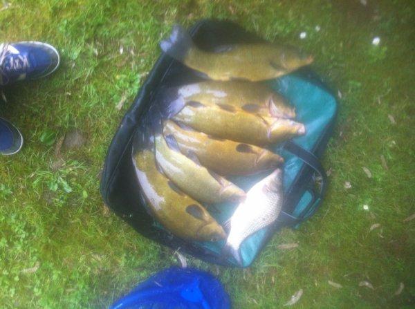 Pêche au coup en étang!