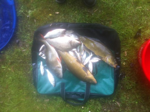 Pêche au coup en étang