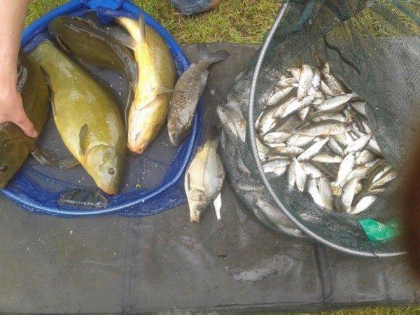 Pêche de petits et gros poissons