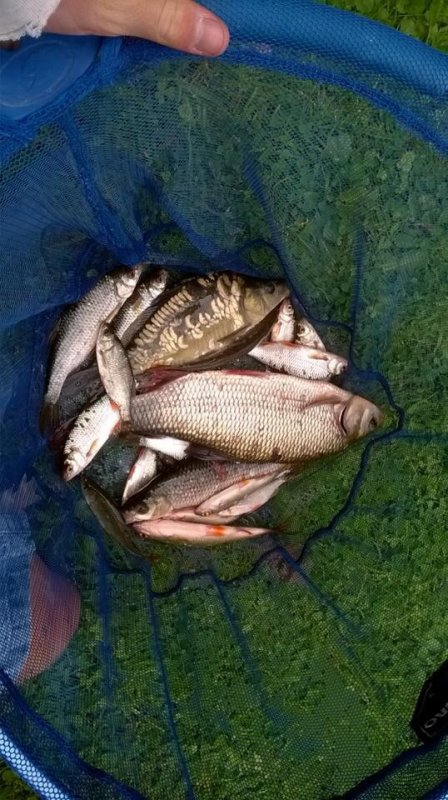 Pêche en rivière!