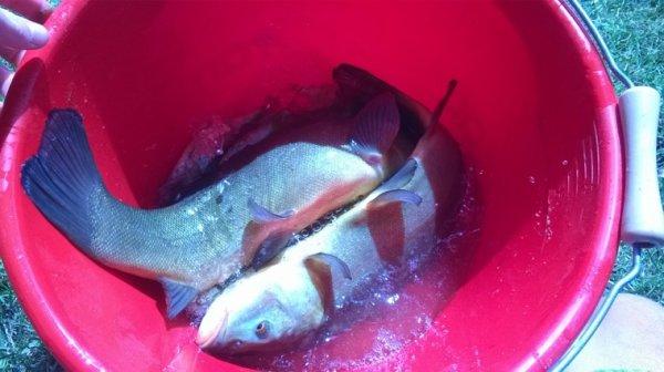 Pêche 1h30