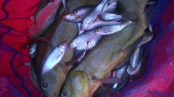Pêche de bordure