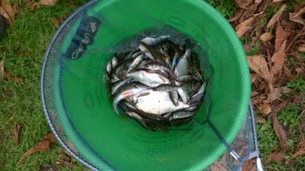 Pêche en plein centre de Lille entre copains