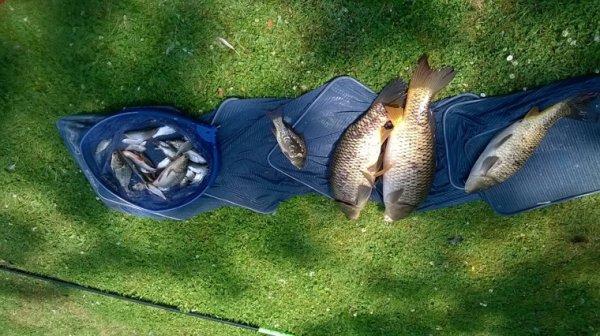 Pêche mixte