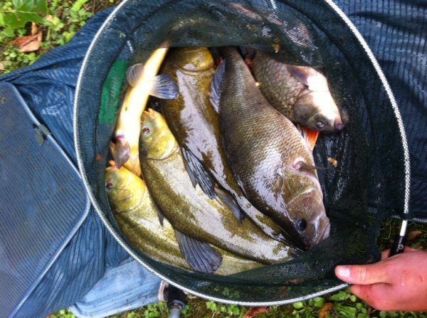 Pêche au blanc 1:45h chrono