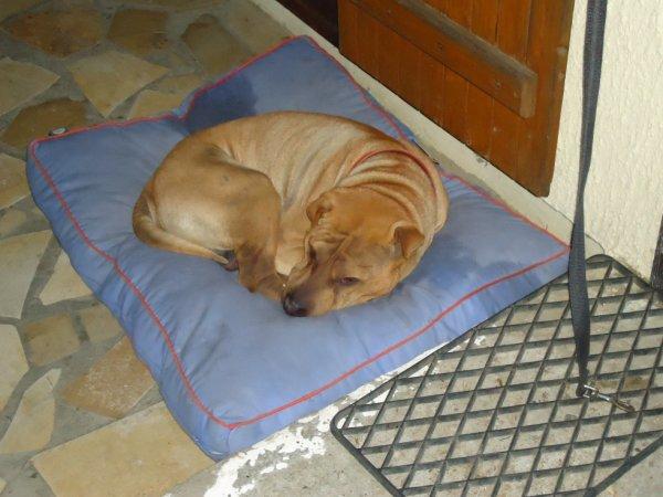 le petit chien^^
