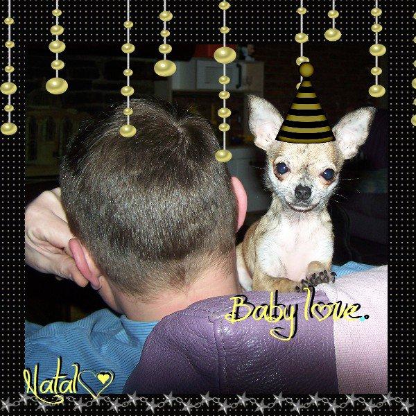 Ma baby love(l) mon amour de chihuahua (l) 900gr d'amour à 6 mois (l) merci conny (l)