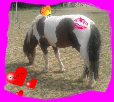 aujourd'hui j'ai vu mon futur poney pour la première foi
