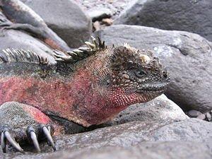 """Vu que je représente la Guadeloupe, je représente aussi son """"dinosaure"""" qu'il soit terrestre ou marrin ;)"""