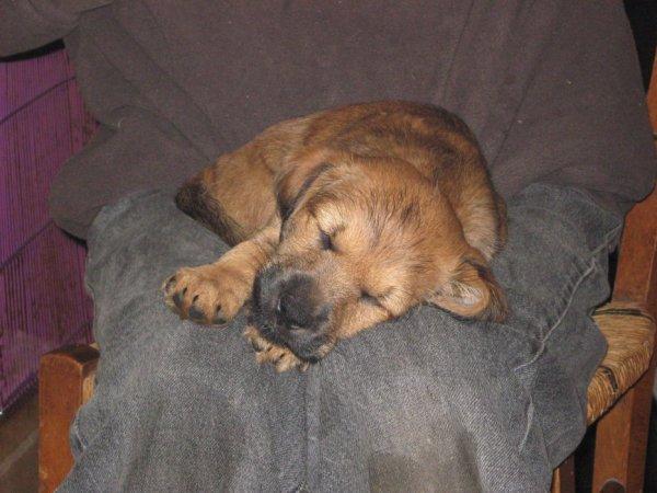 Pour les gens qui voudront sauver une chienne de la SPA de Périgueux