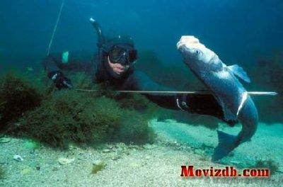 vive la chasse sous marine