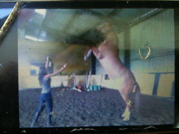 Les chevaux sont toujours vivants !