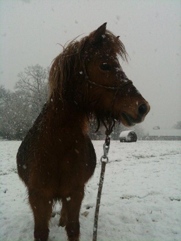 Ma Peper chérie sous la neige ! On a eu 12cm cette année, un record dans la region !