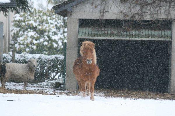 Peper sous la neige