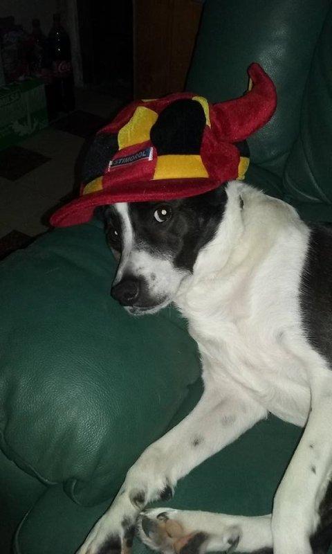 Mon chien Jack