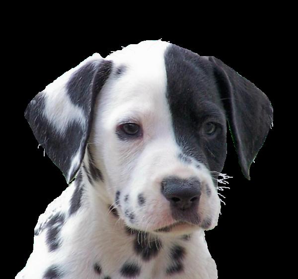 PETITION DE GAIA _PROTECTION ANIMAUX