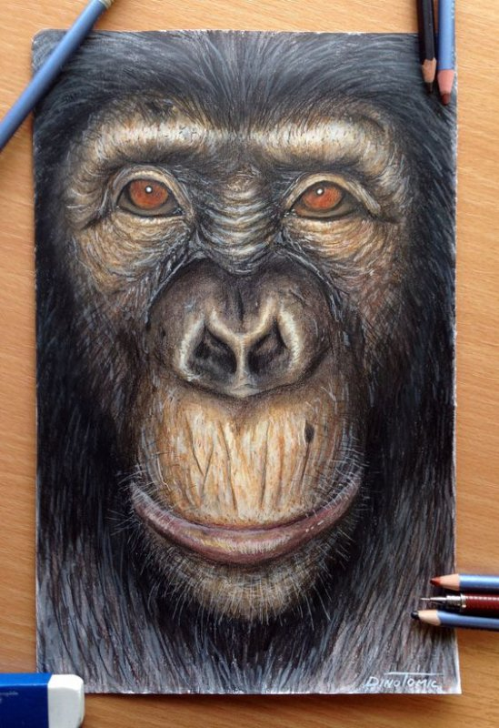 Descendons-nous du singe ?