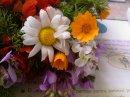 Photo de FleursdeMsila28