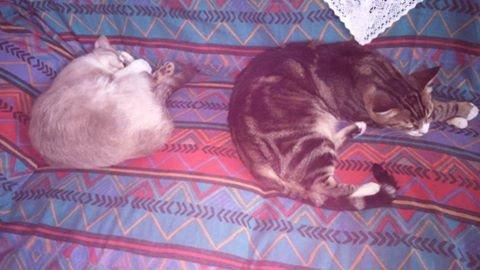 mes deux chats luckys a droite et a gauche mon bébé gatsby