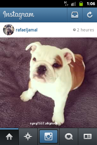 Nouvelle photo de Pumba ..