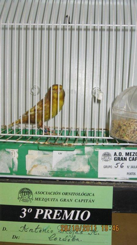 FHAEO AMARILLO NEVADO 2011...GANADOR